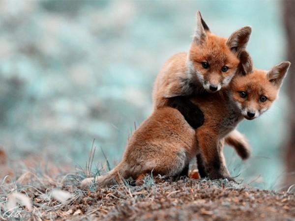 Детёныши диких животных